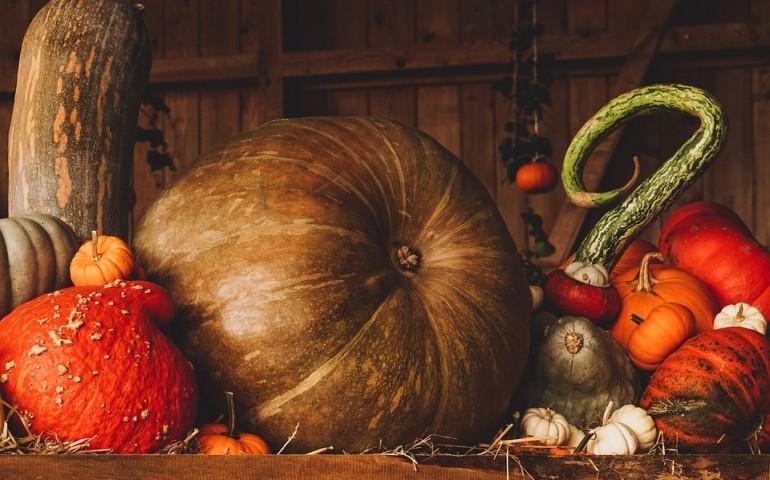 Immagine Zucca Di Halloween 94.Curiosita E Origini La Zucca